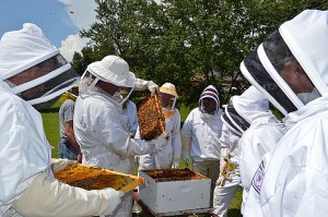 new beekeepers