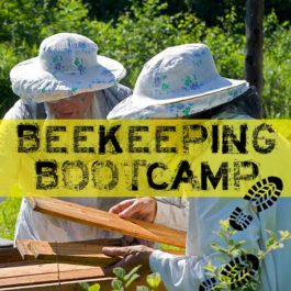 beekeeping bootcamp bee well honey farm