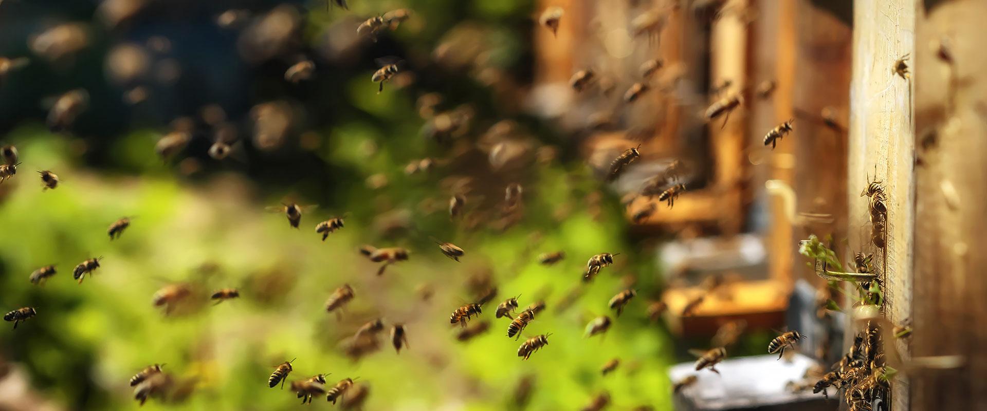 Honey Bees for Sale - Beekeeping Supplies - Bee Well Honey ...