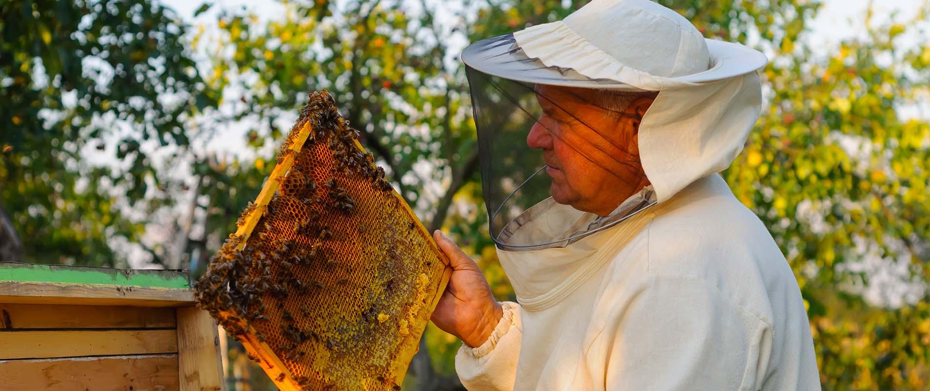 south carolina beekeepers association meeting