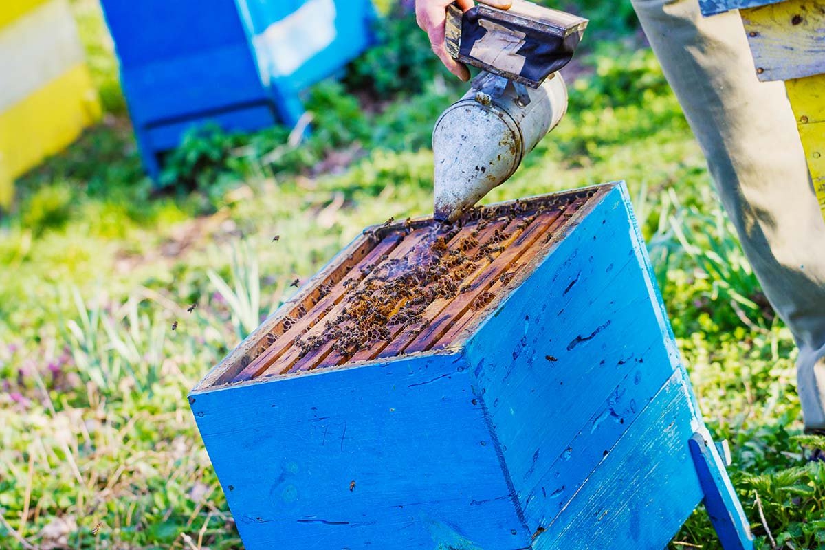 Could the Honey Crop in Upstate South Carolina Disappear