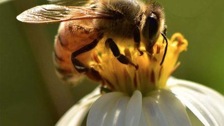 bee well honey farm