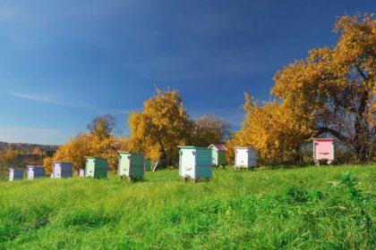 bee well honey