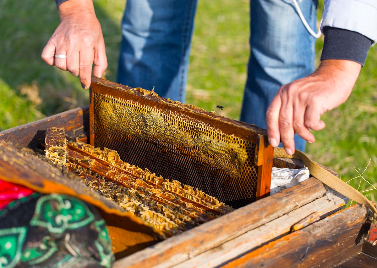 Beekeeping Articles and Helpful Information | Bee Well Honey