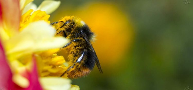 Bee Keepers Supplies - Honey Bees for Sale - Bee Well ...