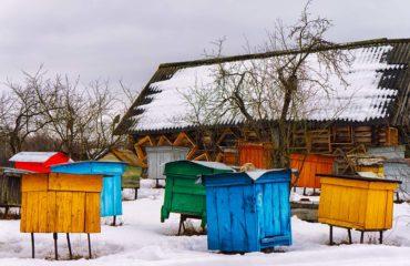 beekeeping tips for december bee well honey farm