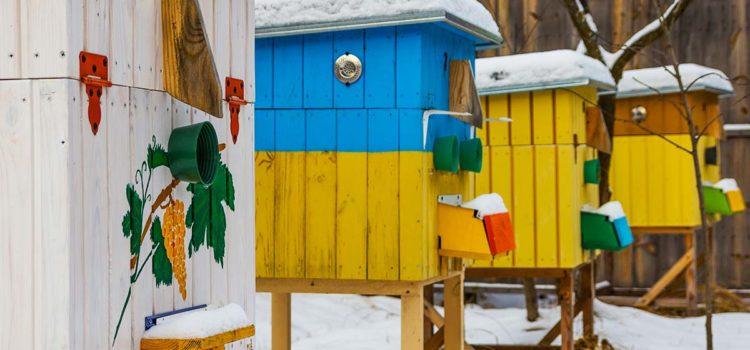 beekeeping tips for february bee well honey