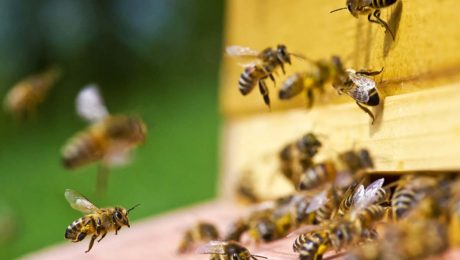 tips for purchasing bees bee well honey farm