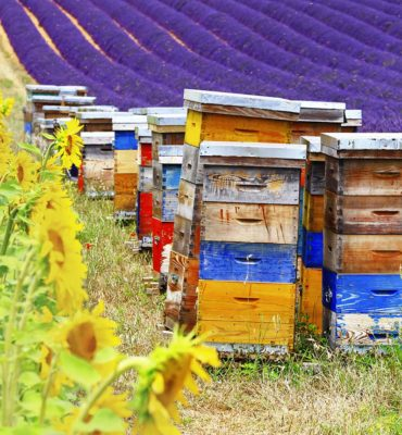 bee supplies