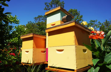 beekeeping tips for may