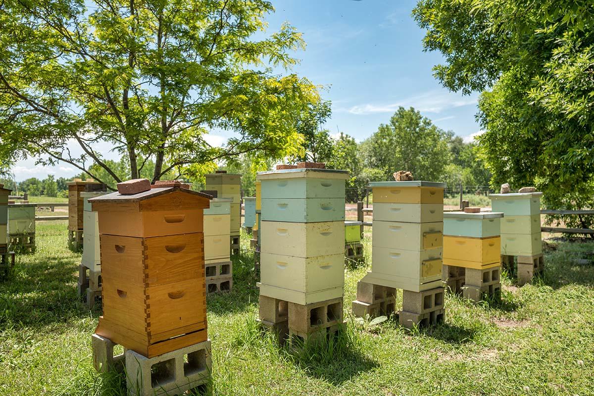 Beekeeping Tips: Power in the Bee Yard | Bee Well Honey Farm